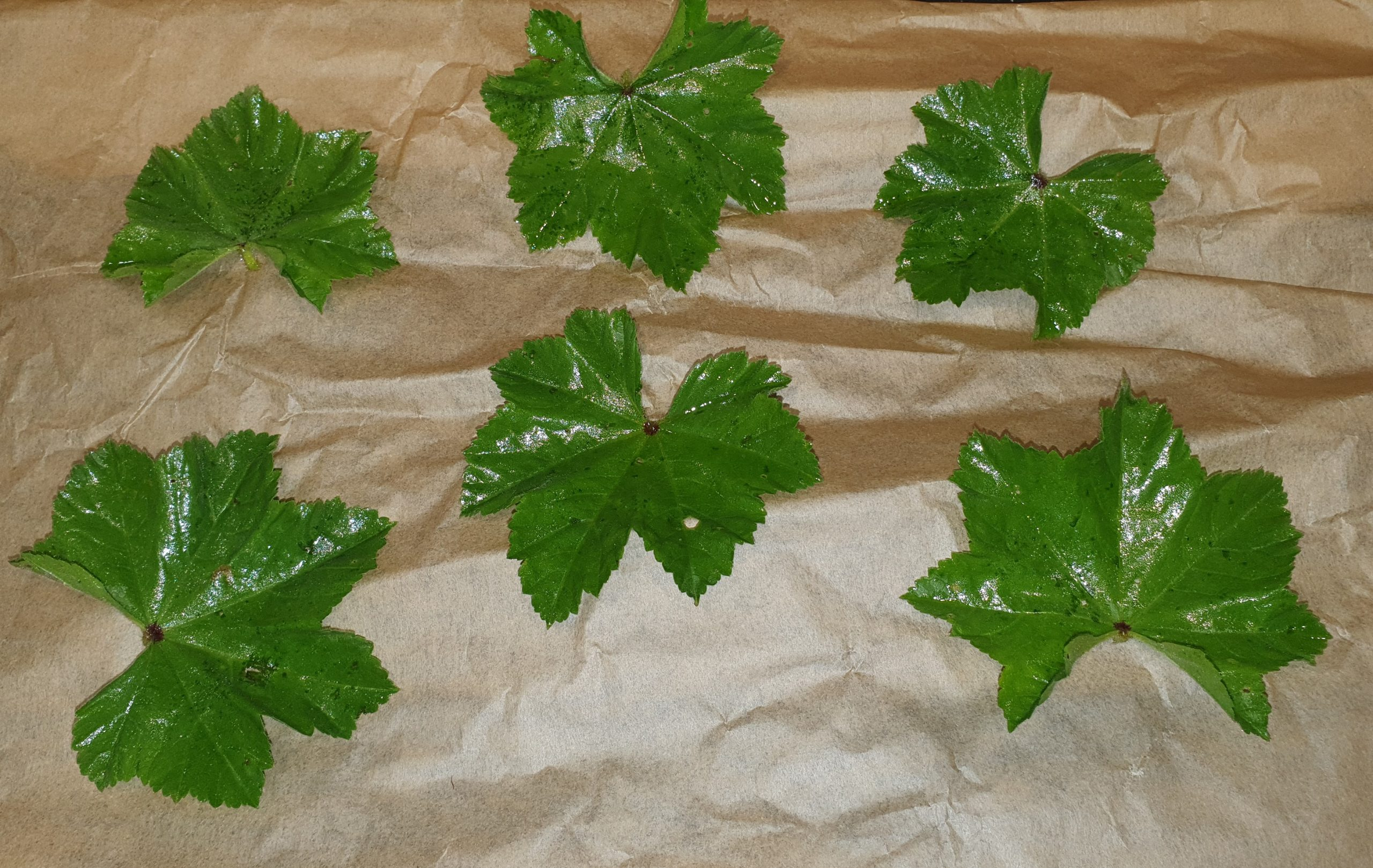 Mallow Leaf Crisps